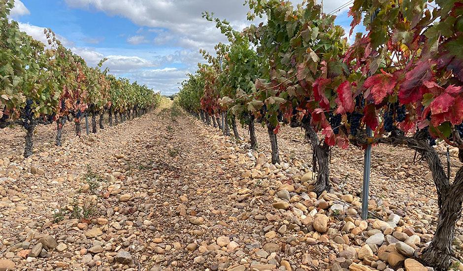 Moradillo de Roa vineyards, Burgos