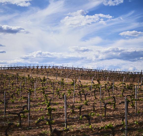 Villalba de Duero vineyards, Burgos